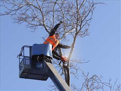 Photo Abattage d'arbre n°143 dans le département 62 par DAVID