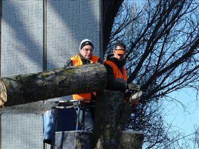 Photo Elagage d'arbre n°144 zone Pas de Calais par DAVID