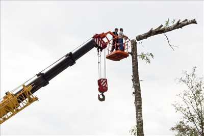 Photo Abattage d'arbre n°146 à Arras par DAVID