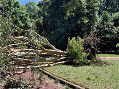 Photo Abattage d'arbre n°147 dans le département 62 par DAVID