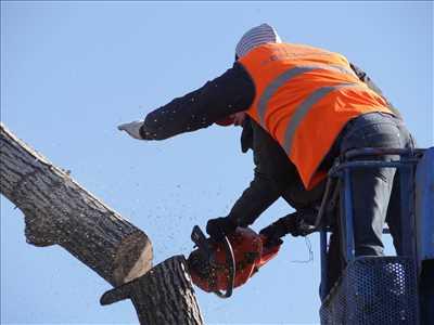Photo Abattage d'arbre n°148 zone Pas de Calais par DAVID
