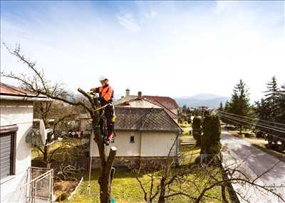 Exemple Elagage d'arbre n°149 zone Pas de Calais par DAVID