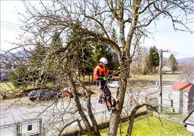 Photo Elagage d'arbre n°150 à Arras par DAVID