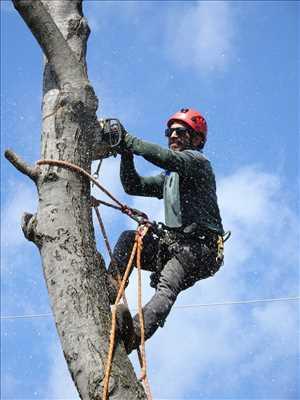 Photo Abattage d'arbre n°16 zone Nord par Bernard