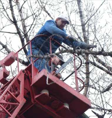 Exemple Abattage d'arbre n°193 zone Alpes-Maritimes par Peter