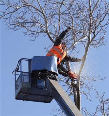 Photo Abattage d'arbre n°194 à Vallauris par Peter