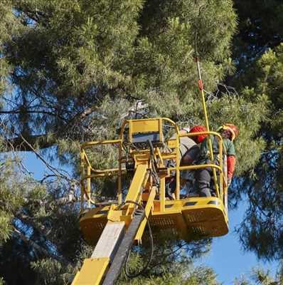 Photo Abattage d'arbre n°195 dans le département 6 par Peter