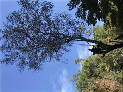 Photo Abattage d'arbre n°20 zone Hérault par Jordan