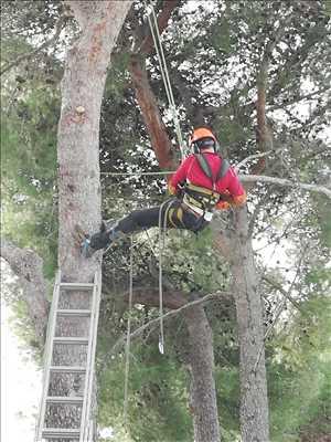 Exemple Elagage d'arbre n°217 zone Var par Cocoon Jardin