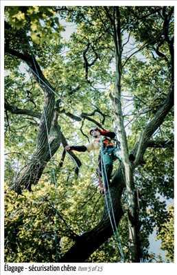Photo Elagage d'arbre n°248 zone Paris par Fred
