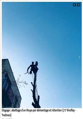 Exemple Abattage d'arbre n°249 zone Paris par Fred