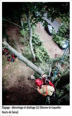 Photo Abattage d'arbre n°252 zone Paris 13ème par Fred
