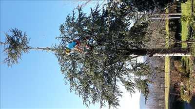 Exemple Elagage d'arbre n°253 zone Hautes Pyrénées par CHRISTOPHE