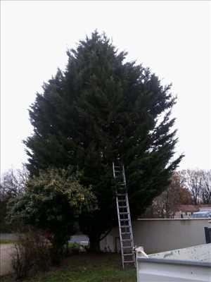Photo Elagage d'arbre n°26 à Poitiers par Brandon