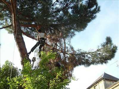 Photo Elagage d'arbre n°268 zone Gironde par CONCEPT PAYSAGER