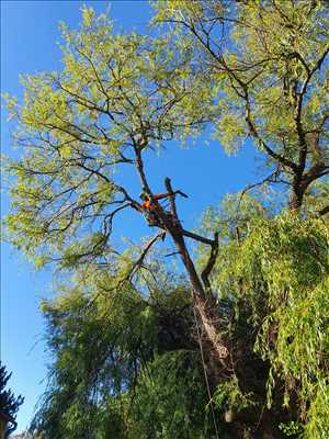Exemple Abattage d'arbre n°269 zone Gironde par CONCEPT PAYSAGER