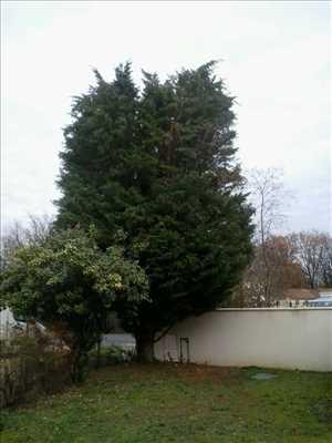 Photo Elagage d'arbre n°28 zone Vienne par Brandon