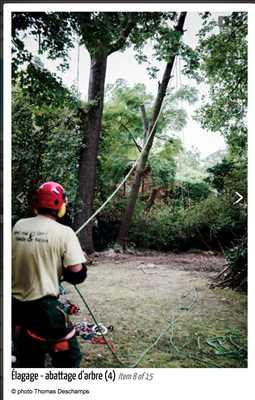 Photo Abattage d'arbre n°299 dans le département 75 par Fred