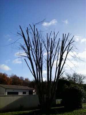 Photo Elagage d'arbre n°30 à Poitiers par Brandon