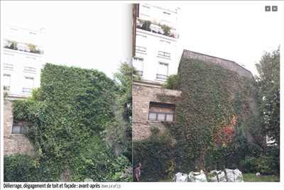 Photo Elagage d'arbre n°300 zone Maisons-Alfort par Fred