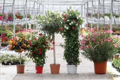 Exemple Jardinier n°301 zone Loir-et-Cher par SARL HORTI SOLOGNE