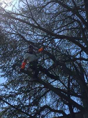 Photo Elagage d'arbre n°307 dans le département 54 par Extrême élagage