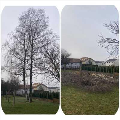 Photo Elagage d'arbre n°308 zone Meurthe-et-Moselle par Extrême élagage