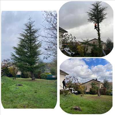 Exemple Elagage d'arbre n°309 zone Meurthe-et-Moselle par Extrême élagage