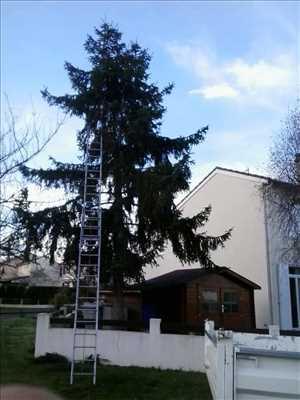 Photo Elagage d'arbre n°31 dans le département 86 par Brandon