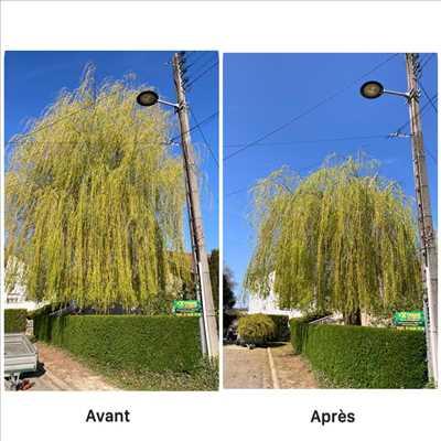 Photo Elagage d'arbre n°311 dans le département 54 par Extrême élagage