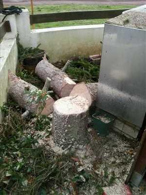 Photo Elagage d'arbre n°32 zone Vienne par Brandon