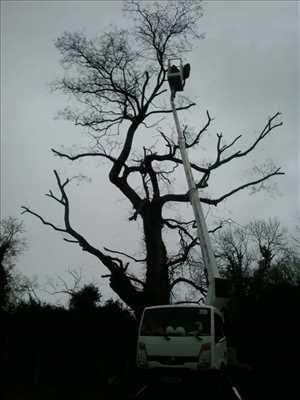 Exemple Elagage d'arbre n°33 zone Vienne par Brandon