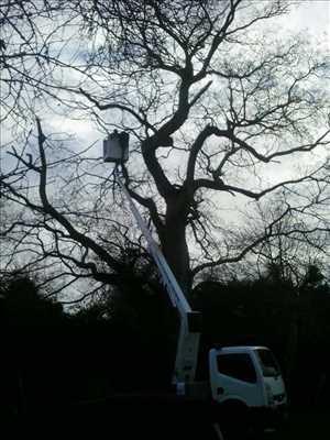 Photo Elagage d'arbre n°34 à Poitiers par Brandon