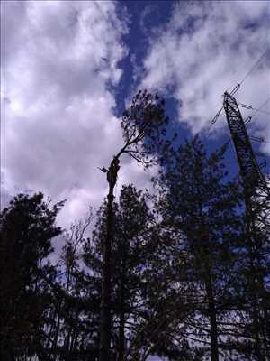 Exemple Elagage d'arbre n°341 zone Isère par Boris