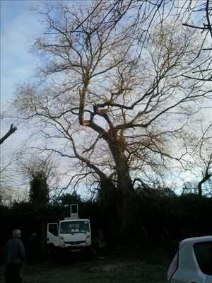 Photo Elagage d'arbre n°35 dans le département 86 par Brandon