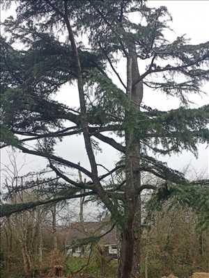 Photo Elagage d'arbre n°382 à Nogent-le-Rotrou par BERGOUNIOUX élagage & paysage