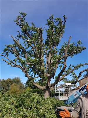 Photo Elagage d'arbre n°392 zone Tarn et Garonne par Charles