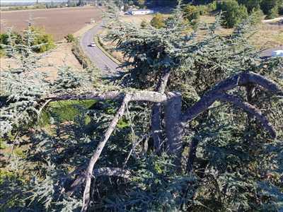 Exemple Elagage d'arbre n°393 zone Tarn et Garonne par Charles