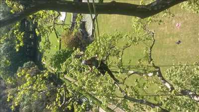 Photo Elagage d'arbre n°43 dans le département 38 par Victor