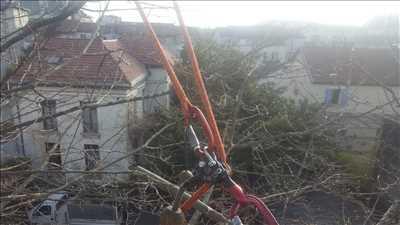 Exemple Elagage d'arbre n°45 zone Isère par Victor