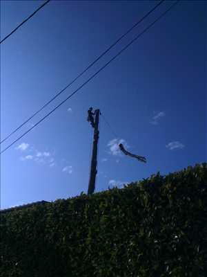 Photo Elagage d'arbre n°50 à Fontaine par Victor
