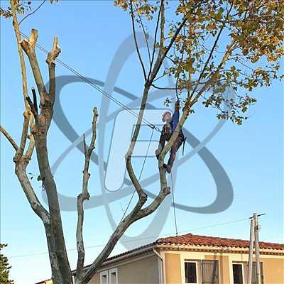Photo Elagage d'arbre n°504 zone Vaucluse par SARL FAYARD