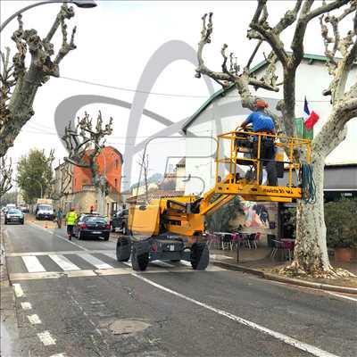 Exemple Elagage d'arbre n°505 zone Vaucluse par SARL FAYARD