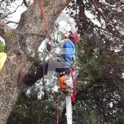 Photo Abattage d'arbre n°508 zone Vaucluse par SARL FAYARD
