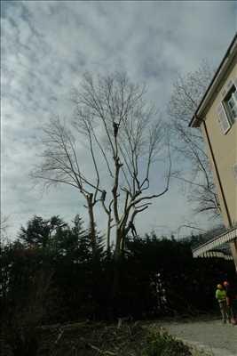 Photo Elagage d'arbre n°51 dans le département 38 par Victor