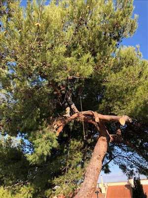 Photo Elagage d'arbre n°52 zone Bouches-du-Rhône par Nelson