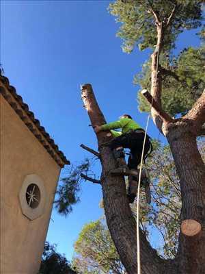 Photo Abattage d'arbre n°55 dans le département 13 par Nelson