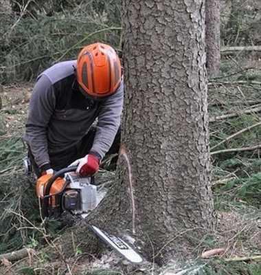 Photo Abattage d'arbre n°550 à Elbeuf par Entreprise Riffet