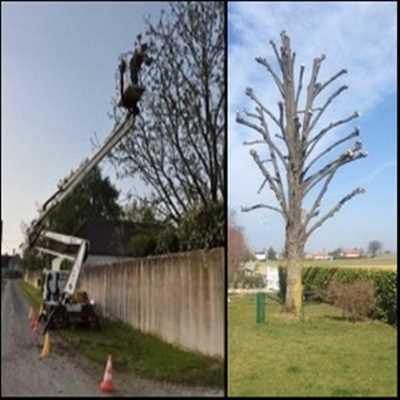 Exemple Elagage d'arbre n°553 zone Seine Maritime par Entreprise Riffet