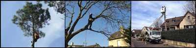 Photo Elagage d'arbre n°554 à Caen par Entreprise Riffet